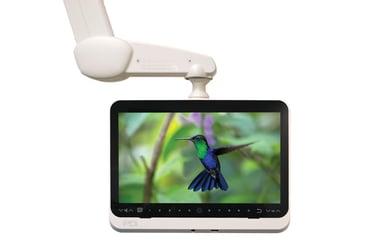 medTV16-hummingbird-LR